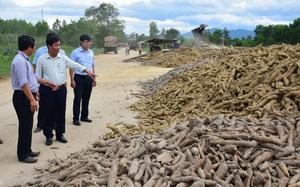 Trồng loại cây cho củ dài, bao nhiêu Trung Quốc cũng mua, nông dân nhiều nơi lãi khá