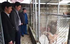 """Hà Giang: Bất ngờ trại nuôi con """"thần may mắn"""" cực quý của người Mông huyện biên giới, giá hàng trăm triệu đồng/con"""