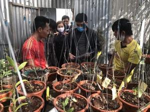 Ly kỳ phá án nhóm trộm vườn lan giả hạc đột biến tiền tỷ ở Lâm Đồng