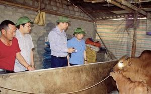 """PCT UBND tỉnh Lê Đức Giang: """"Thanh Hóa phấn đấu tới ngày 20/4 sẽ công bố hết dịch viêm da nổi cục trên trâu bò"""""""