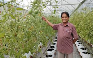 """Bình Định: Trồng đu đủ, cà chua, trồng rau sạch có gì hay mà thôi làm """"ông chủ"""" bỏ về quê tự làm giám đốc?"""