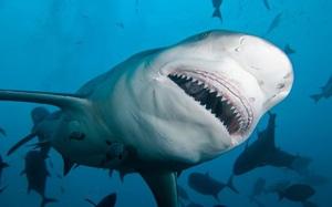 Kinh hoàng khoảnh khắc ngư dân bị cá mập tấn công