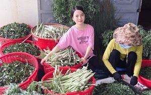 Về quê khởi nghiệp, nữ 8X xinh đẹp xứ Quảng trở thành bà chủ trên vùng đất khô cằn sỏi đá