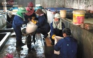 Quảng Trị: Nhiều người tập trung đến kho hàng hải sản hôi thối để làm điều đáng mừng