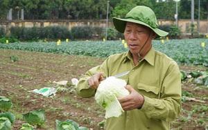 Nông dân Hà Nội: Không thể cứ trông chờ giải cứu nông sản, chúng tôi cần nhiều hơn thế