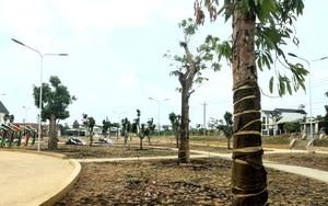 Ở Bình Phước sắp có công viên lạ toàn xoài là xoài, tuyển hơn 300 cây xoài nhiều giống về trồng