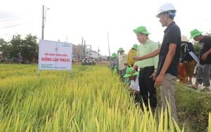 Khánh Hòa: Giống lúa TBR225 gạo ngon, cơm mềm - năng suất ra sao mà nông dân mê mẩn?