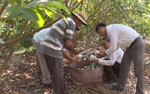 Sóc Trăng: Hiệu quả hỗ trợ sản xuất từ nguồn vốn Tam nông