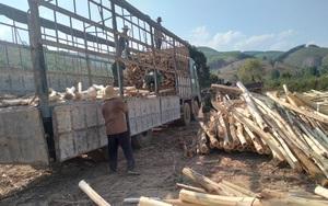 Đắk Lắk: Không trồng được cao su, cà phê, hồ tiêu, vậy dân ở vùng này trồng cây gì mà vẫn giàu lên?