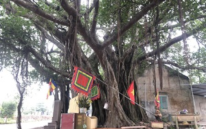 """Kể chuyện làng: Chuyện cây đa thiêng """"Giời ơi""""!"""