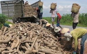 1 triệu tấn nông sản này được Trung Quốc mua với giá tăng 7%, nông dân vẫn lo vì một loại bệnh khó chữa