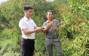 Đồng vốn Agribank tiếp sức cho nông dân Bắc Yên làm giàu