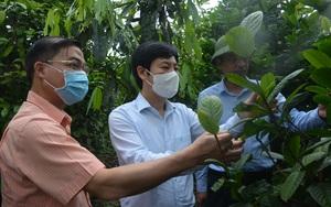 """Phó Chủ tịch Trung ương Hội Nông dân Việt Nam: Thán phục những """"ông chủ"""" rừng ở Ba Chẽ"""