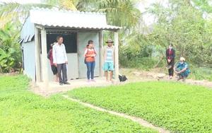 Bạc Liêu: Rau má rớt giá, nông dân chán không buồn thu hoạch