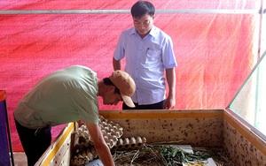 """Trai làng tỉnh Quảng Bình làm giàu khác người nhờ nuôi con đặc sản """"độc lạ"""""""