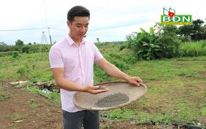 Đắk Nông: Nghỉ việc ở Đồng Nai, trai đẹp về làng trồng mồng tơi tuốt hạt phơi khô bán vô Sài Gòn