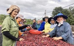 Nâng cao vai trò của Hội Nông dân Việt Nam trong việc hỗ trợ nông dân khởi nghiệp, sáng tạo