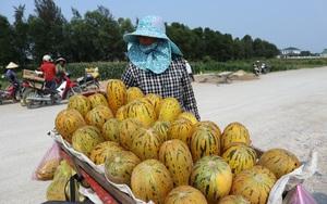 Nghệ An: Trồng thứ cây bò lan man ngoài ruộng, ra quả nứt toe toét, lãi gấp 7 lần cấy lúa
