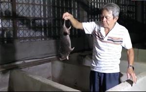 Cần Thơ: Lão nông U60 thành tỷ phú nhờ nuôi chuột tre cho ăn mía