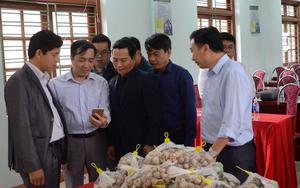 Hòa Bình: Đặc sản tỏi tía trồng trong sương mù ở huyện Mai Châu có gì đặc biệt?