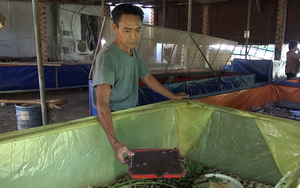 """Một ông nông dân tỉnh Đồng Nai làm giàu nhờ nuôi 2 loài con đặc sản """"nhát chết"""""""