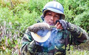 Cà Mau: Loài côn trùng như con ruồi làm tổ be bé luyện thứ mật ngon cỡ nào mà dân lội sình săn lùng?