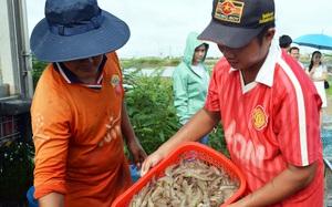 Mỹ - Nga săn hàng, Nhật Bản tăng mua, mới 4 tháng loài thủy sản này của Việt Nam đã thu tỷ USD