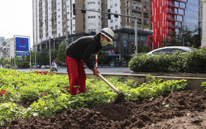 Lạ: Cảnh người Hà Nội trồng rau sạch vào ô đất ven đường để chống đổ trộm phế thải