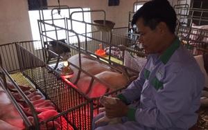 Xã Cấn Hữu (Quốc Oai, Hà Nội):  Xây dựng nông thôn mới gắn với bảo vệ môi trường