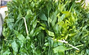 """Đặc sản rau rừng ở Cao Bằng, trước nông dân ăn đỡ đói, nay """"đãi"""" cả nhà giàu"""