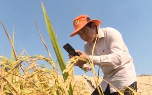Đồng Tháp: Gặp gỡ người nông dân tìm đầu ra cho nông sản qua mạng xã hội