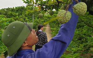 """Một ngày giải ngân hơn 1 tỷ đồng, nông dân Quảng Ninh """"vỡ òa"""" khi nhận vốn vay"""