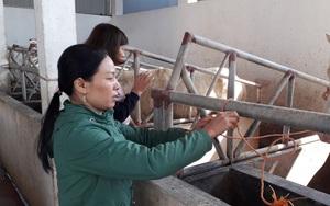 Hội Nông dân tỉnh Thái Nguyên giải ngân 3,4 tỷ đồng Quỹ Hỗ trợ nông dân thực hiện 7 dự án trồng trọt, chăn nuôi