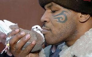 Vì 1 con chim bồ câu, Mike Tyson đấm gục người đàn ông dọn rác