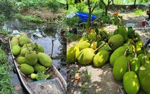 Giá mít Thái hôm nay 16/5: Chủ vựa mua mít tỉnh Tiền Giang nói điều bất ngờ gì khiến nông dân thở phào nhẹ nhõm?