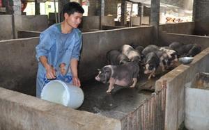 Hà Giang: Kiếm tiền tỷ nhờ nuôi lợn đặc sản OCOP 4 sao bên sông Nho Quế