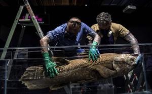 Tìm thấy cá bốn chân 'đã tuyệt chủng' 420 triệu năm tuổi vẫn còn sống dưới đại dương