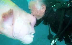 Tình bạn diệu kỳ tồn tại 30 năm giữa người và cá dưới vực sâu 17m