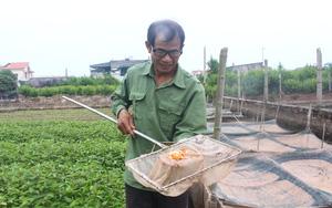 """Thái Bình: """"Quăng"""" 2,5 tỷ để nuôi thứ cá bé tí mà đẻ rõ lắm, ông nông dân bán cả vạn con thu chục triệu/ngày"""