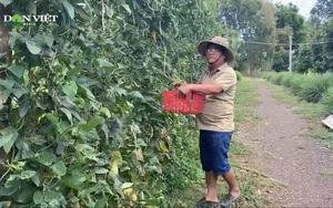 Anh nông dân 8x biến vườn tạp thành trang trại đa cây, thu lợi hàng trăm triệu mỗi tháng