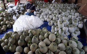 """Bình Dương: Dưa lưới khó tiêu thụ vì Covid-19, Hội Nông dân kêu gọi """"giải cứu"""" giúp nông dân"""