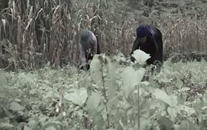 Người thay đổi Pha Luông - vùng đất của cây thuốc phiện (Kỳ 1)