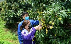 Tâm dịch Bắc Giang sẽ ưu tiên tiêm vaccine Covid-19 cho người dân vùng trồng vải thiều
