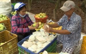 Nông dân Đồng Tháp cần thêm nhiều kiến thức về thu hoạch, sơ chế nông sản