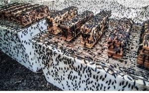 Độc đáo mô hình nuôi cá lăng bằng ruồi lính đen của ông giáo quê Thạch Thất