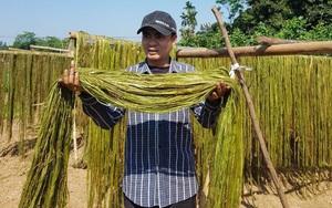 Phú Thọ: Trồng thứ cây lạ, trồng 1 lần chặt trong 10 năm, ông nông dân thu nhập cao không ngờ