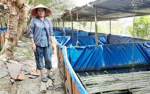 An Giang: Quây bạt trên cạn nuôi lươn không bùn, bắt lên toàn lươn to, có bao nhiêu thương lái cân hết sạch