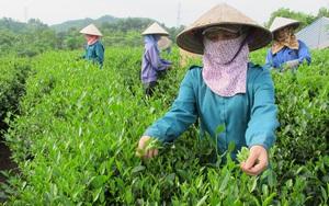 Đang khủng hoảng vì dịch Covid-19, Ấn Độ vẫn nhập cả nghìn tấn nông sản này của Việt Nam để làm gì?