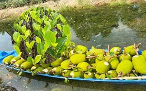 Giá mít Thái hôm nay 25/5: Lo dội chợ, nhiều nông dân bất ngờ hủy trồng thêm mít Thái, giá mít giống giảm mạnh