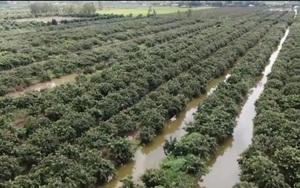 Cần Thơ: Huyện Cờ Đỏ xây dựng nông thôn mới gắn với phát triển kinh tế vườn